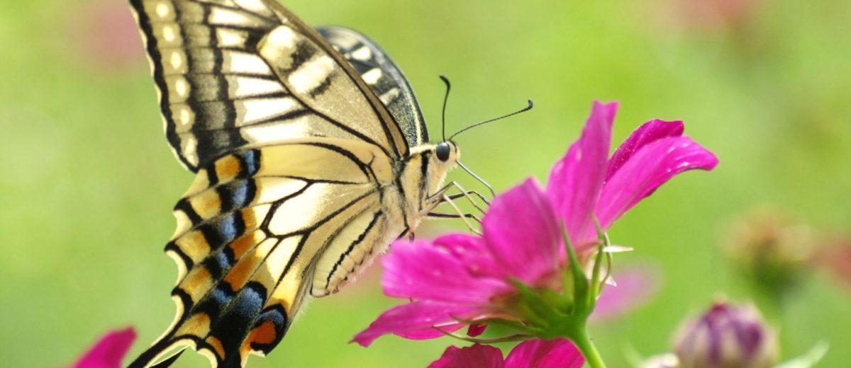 La libertà consapevole delle farfalle – Optimistan News Good